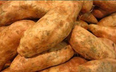 Kookworkshop; Zoete aardappel in de hoofdrol op dinsdagavond 20 november