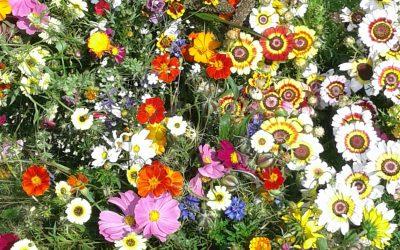Die bloemenzee….die is er!