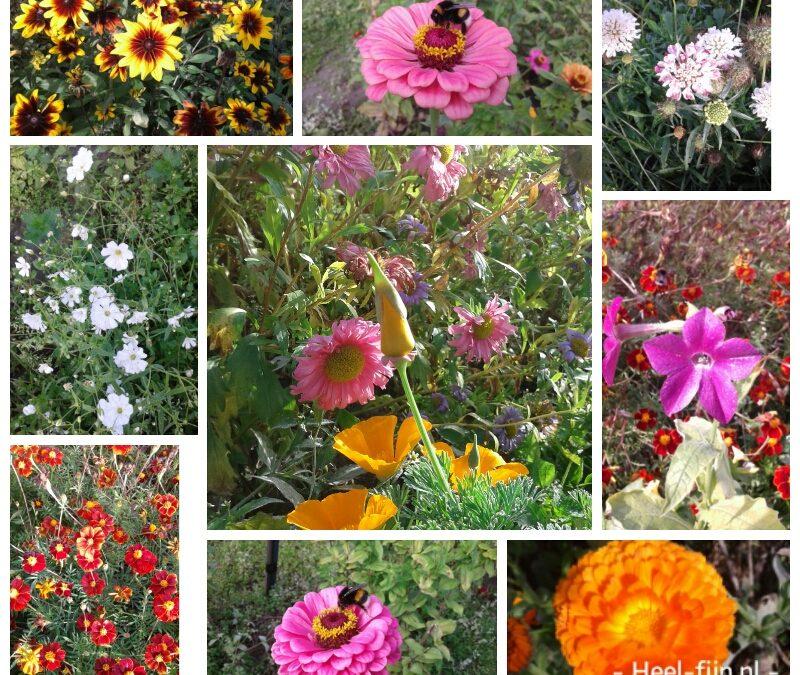 Nog een rondje door de bloemenpluktuin en een dank jullie wel!