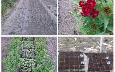 De eerste zaailingen zijn geplant!
