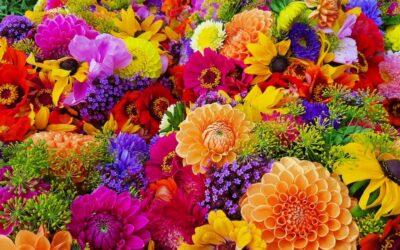 Een bloemenzee